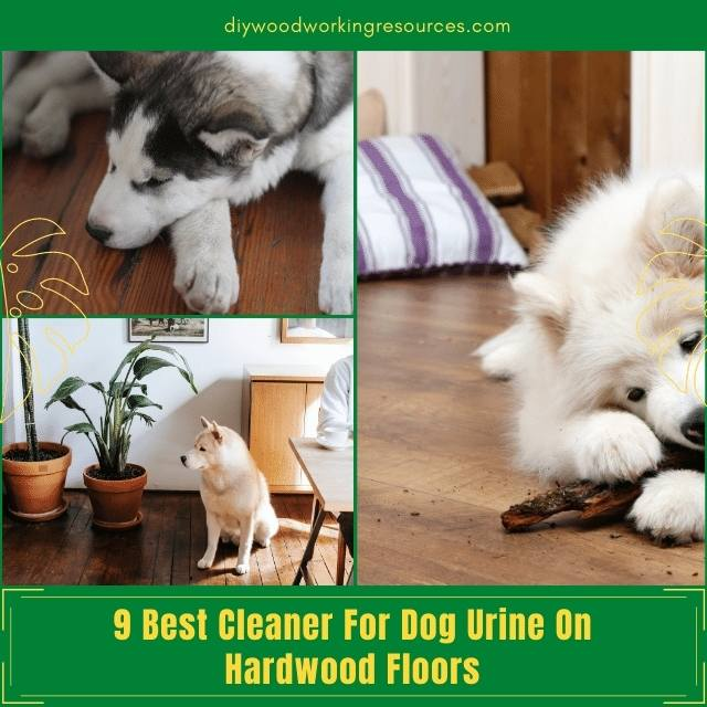 Top 9 Best Cleaner For Dog Urine On Hardwood Floors